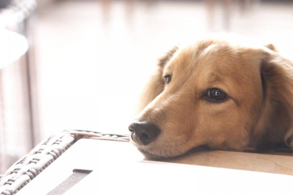 kindle-doggy