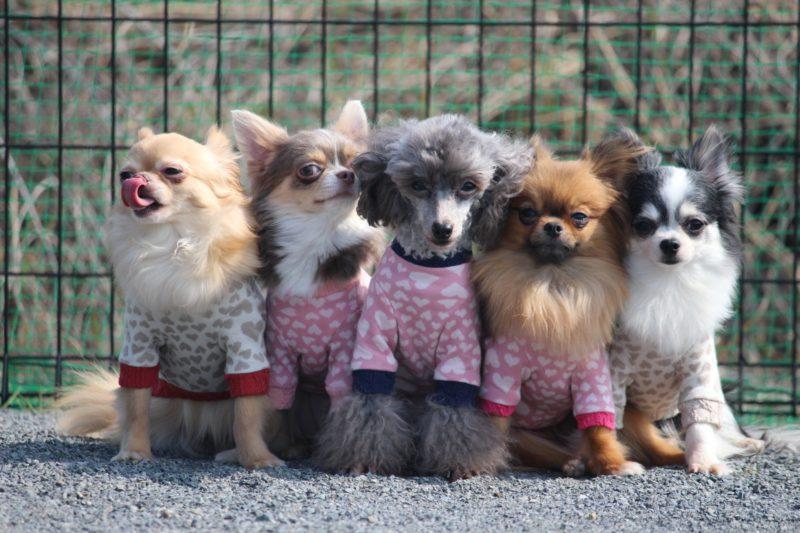 five-dog